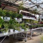 Plants pépinière