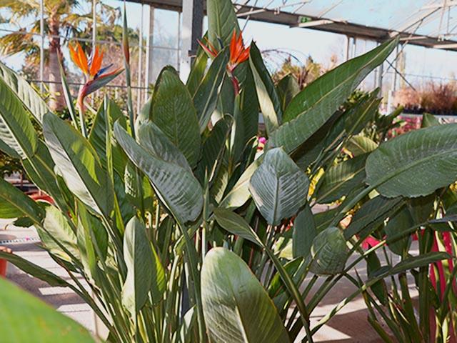 Plantes exotiques Montpellier
