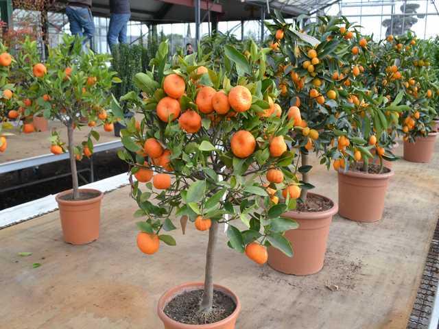 Fruitiers Montpellier