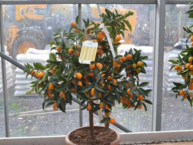 Arbre fruitier pépinière Montpellier
