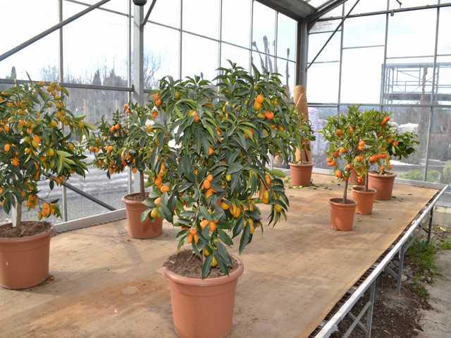Plantes pepiniere
