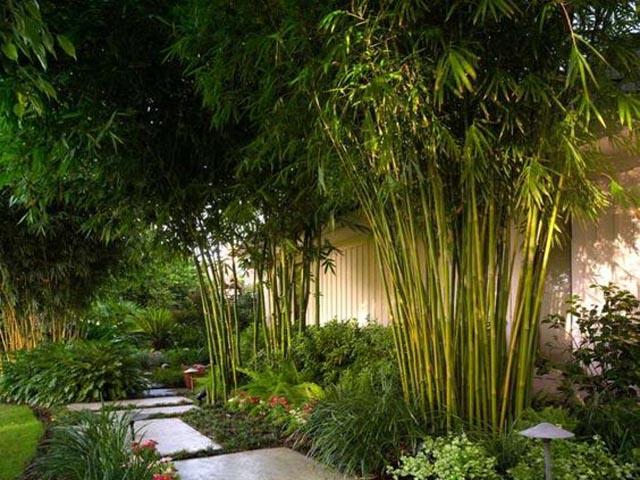 Bambous à Montpellier