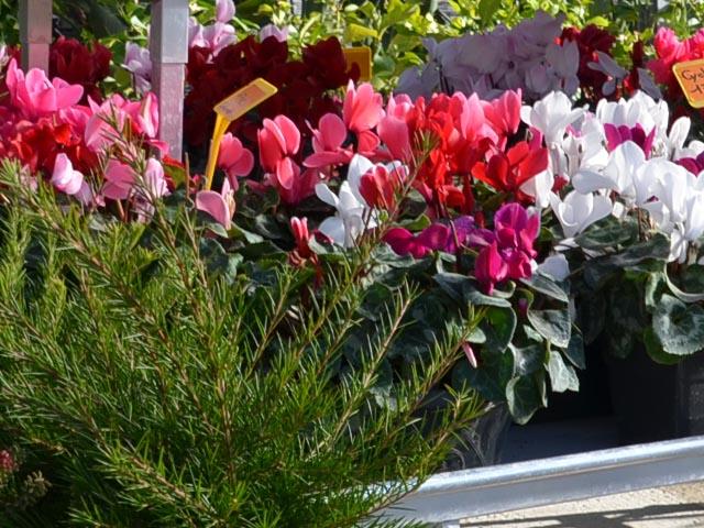 Pépinière Montpellier – Jeunes plants